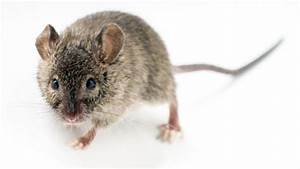 Maus Im Haus : eine maus ist im haus was nun maus ins freie transportieren ~ A.2002-acura-tl-radio.info Haus und Dekorationen