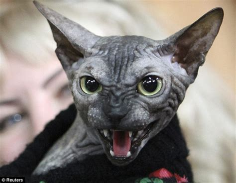 Is This The World's Scariest Cat? Sphynx Monster Looks