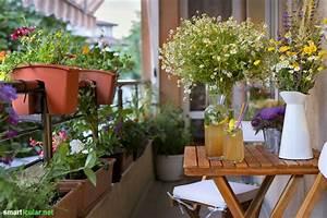 Was Tun Gegen Spatzen Auf Dem Balkon : bienenfreundliche blumen f r deinen balkon ~ Markanthonyermac.com Haus und Dekorationen