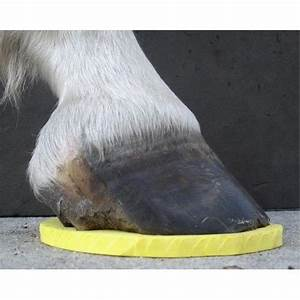 24 Best Horse Details Hooves Images On Pinterest