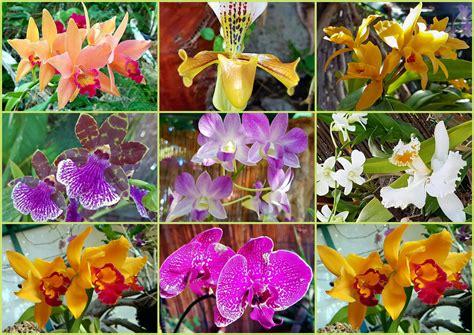 Im Orchideen Garten Foto & Bild  Pflanzen, Pilze
