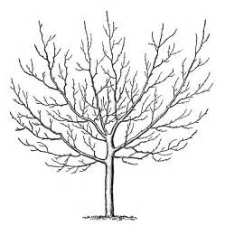 winter tree clipart free large images