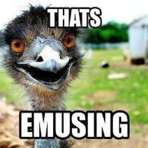 Ostrich Memes - oh emu zoo puns pinterest emu funny stuff and funny things