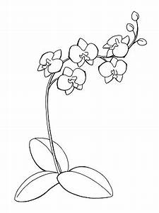Orchid clipart black and white - Pencil and in color ...