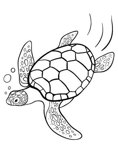printable turtle coloring page     http