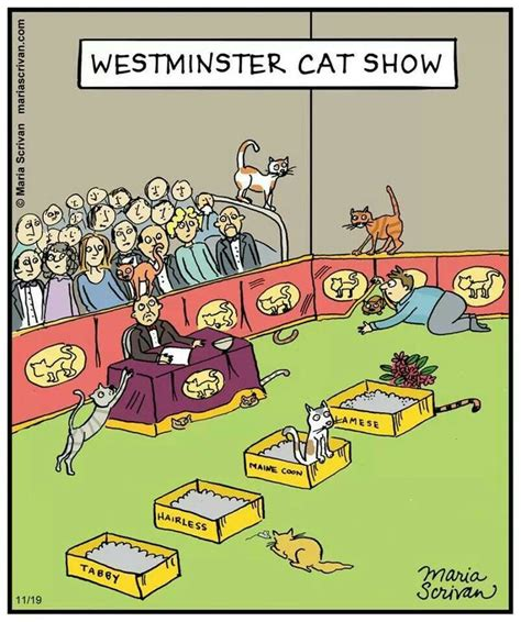 Westminster Cat Show Cats Pinterest Westminster And