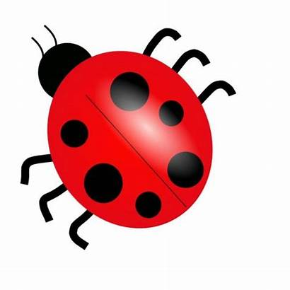 Bug Clip Clipart Bugs Insect Cliparts Insects