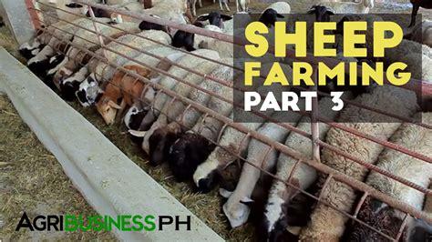 grazing sheep farming management sheep farming part