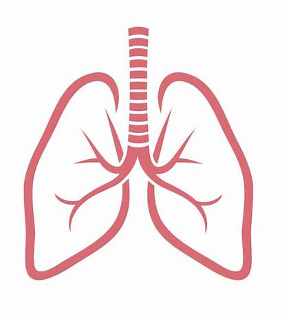 Lungs Lung Clipart Background Respiratory System Transparent