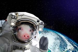 Portrait Of A Pig Astronaut In Space Stock Photo - Image ...