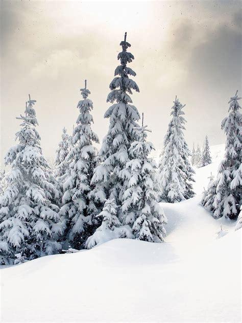 Winter Wonderland Photography Background / 9267 Winter