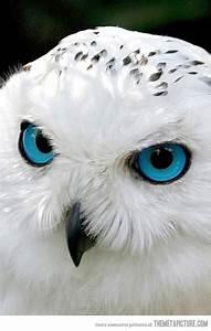 167 best Owls images on Pinterest   Barn owls, Exotic ...