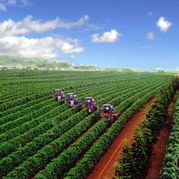 Hawaii kona coffee accounts for about 95% of all coffee produced on the big island. Hawaii Coffee Association - Molokai (com imagens)   Lugares incríveis, Plantação, Lugares