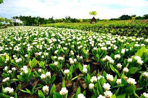 รูปภาพ 1 จาก 5 - ศูนย์พันธุ์พืชเพาะเลี้ยงจังหวัดสุพรรณบุรี ...