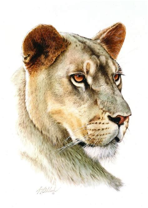 25+ Best Ideas About Lion Head Drawing On Pinterest