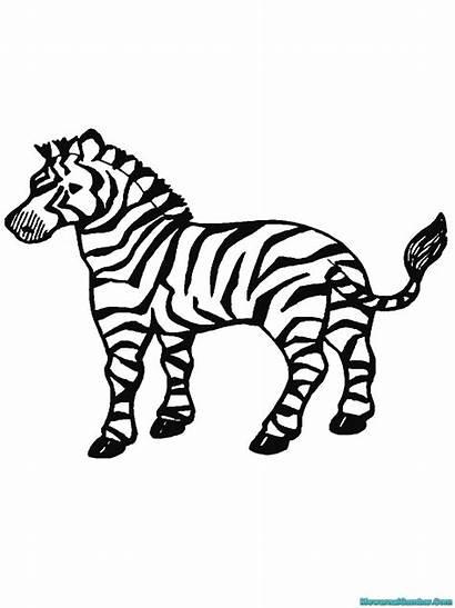 Zebra Gambar Mewarnai Buku Untuk Coloring Diwarnai
