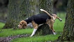 prostatitis dogs symptoms causes treatments