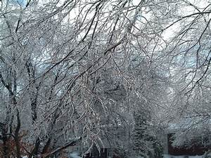 File:December 2004 Winter Storm 1.JPG - Wikimedia Commons