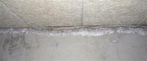 que faire contre les moucherons dans la cuisine que faire contre moisissures sur mur de béton
