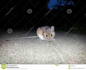 Mouse stock photo image 43947855 for Mice in between floors
