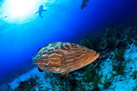 islamorada snorkeling reef fish alligator species lighthouse crocker diving offshore florida keys tall area wall populate