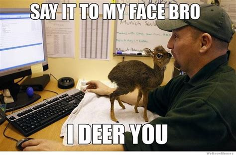 Say That To My Face Meme - white faced deer memes