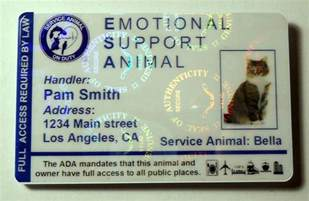 emotional support cat 25 best ideas about emotional support animal on
