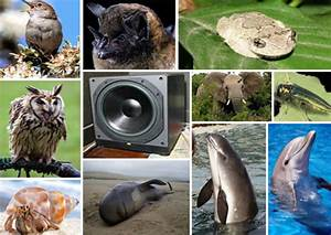 Shut Up: How Noise Pollution Is Affecting 10 Animals ...