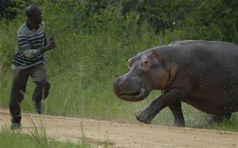 Hippo Kills Zimbabwean Border Jumper