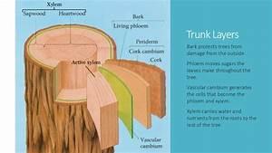 Tree preservation presentation (modified)