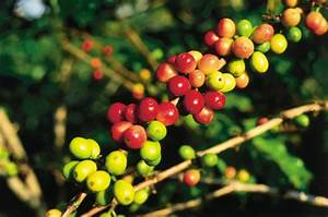 From Cane to Coffee: Hawaiian cash crops | Hawaii Tourism ...