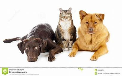 Together Pets Three Dogs Cat Royalty Background
