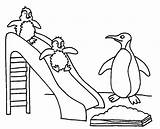 Coloring Penguin Pages Cartoon Printable Popular sketch template
