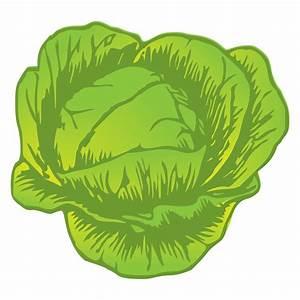 Lettuce Plant Drawing 36625 | NOTEFOLIO