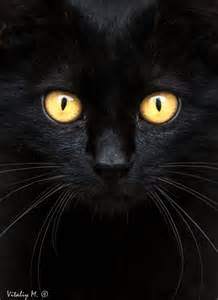 Beautiful Black Cat Yellow Eyes