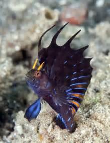 amazing blue sea slug limace de mer vie aquatique et biologie marine