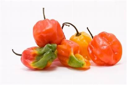Peppers Caribbean Jamaican Chillies Mixed Bonnet Scotch