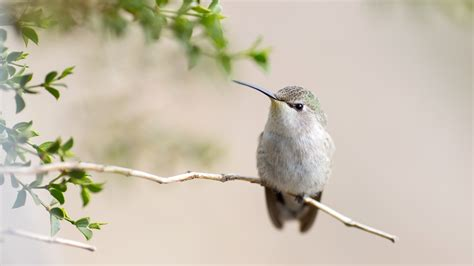 2048x2048 hummingbird 4k ipad air hd 4k wallpapers images