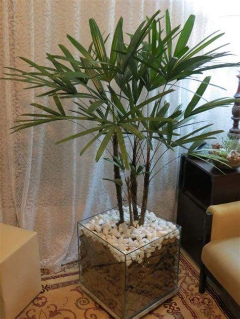 24 plantas perfeitas para decorar o interior da sua casa ...