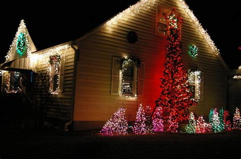 christmas lights housing a forest