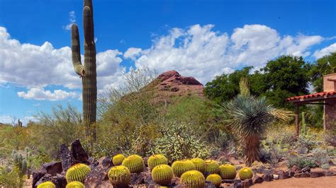 Desert Botanical Garden - sonoran desert nature walks hiking trails in
