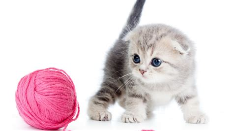 Kitten Background Kittens Wallpapers For Desktop Hd Pictures Images Photos