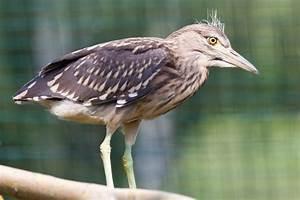 Animal beak bird Free stock photos in JPEG (.jpg ...