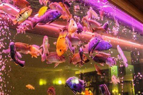 photo gratuite aquarium poissons d ornement image gratuite sur pixabay 707730
