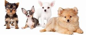 dog house grooming shop in portsmouth va 23701 citysearch With dog house grooming