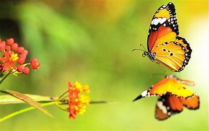 Butterfly Water Reflection Wallpapers Butterflies Flying Backgrounds