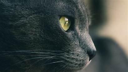 Cat Nose Eyes Wool Gray Hdtv Fhd
