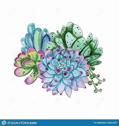Succulent Watercolor Clipart Plant Composition Handpainted Individual