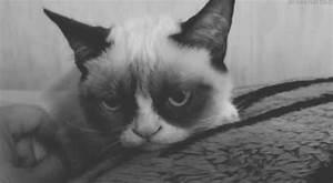 black and white cute animals gif | WiffleGif