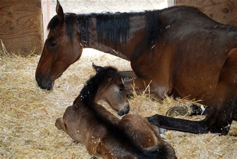 born horses filly makes healthy legs long announce wobbly lovely doing well